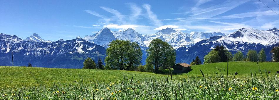 Ende Mai 2016 - Schneebedeckte Berggipfel und blühende Almwiesen - Frühling in der Schweiz