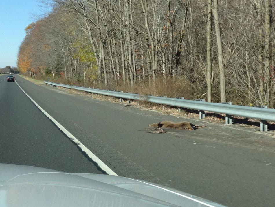 …über 20 tote Rehe auf einer Strecke von 50km Länge!
