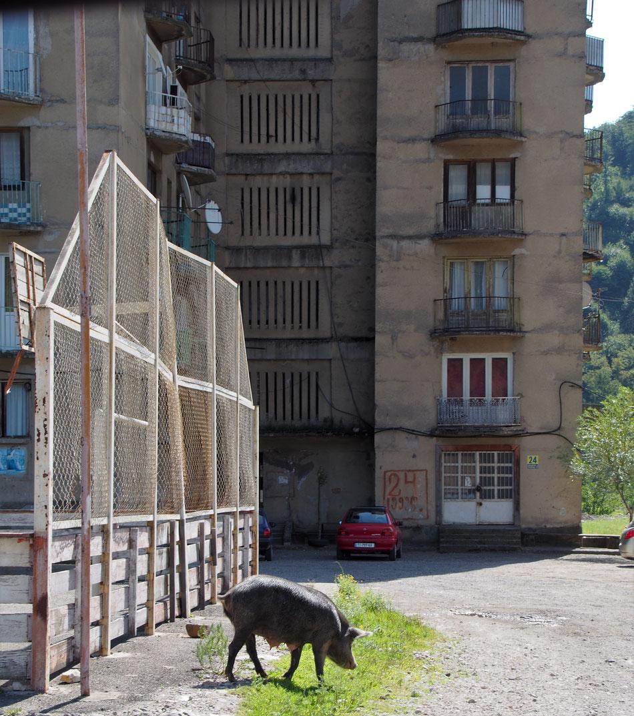 A pusztulás lassú és csöndes folyamata hidegen hagyja a malacokat és kecskéket, akik mindenfelé gangelnek a városban.