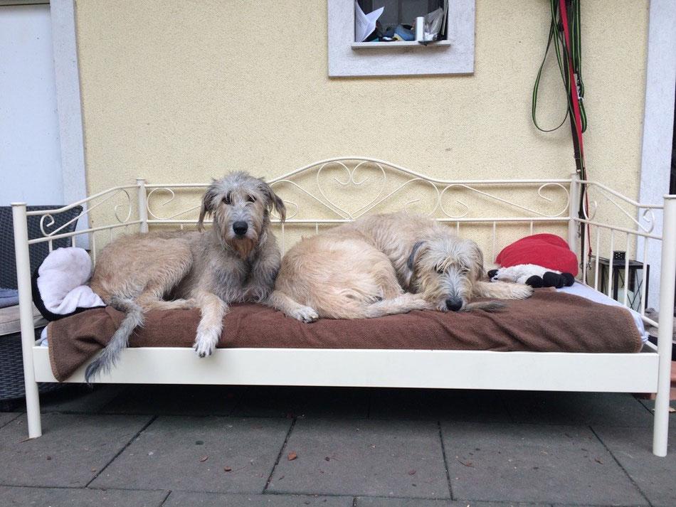 Weihnachtsgeschenk :-) Unser eigenes Bett  ... NUR für uns ... aber wer will kann sich gerne dazukuscheln ;-))