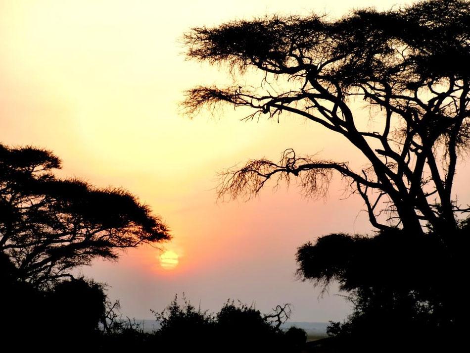 Sonnenaufgang im Tsavo Ost in Kenia mit Schirmakazien