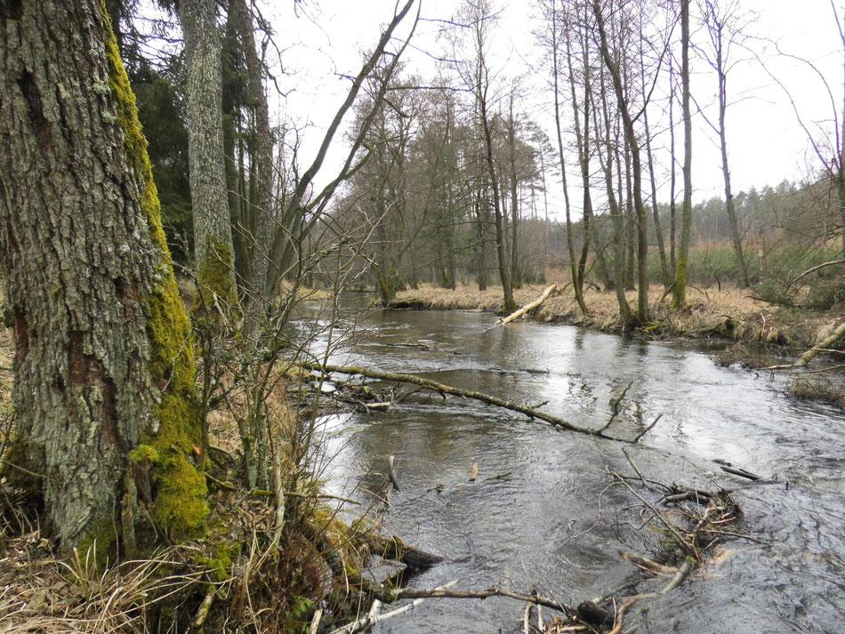 Dobrzyca zwischen Ilowiec und Golce