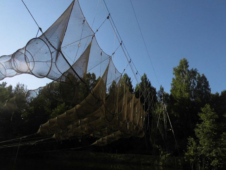 Anlage zum Fischfang