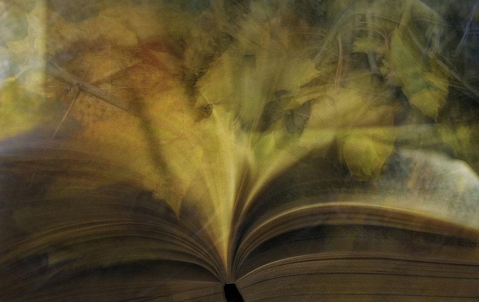 Herbst.Buch