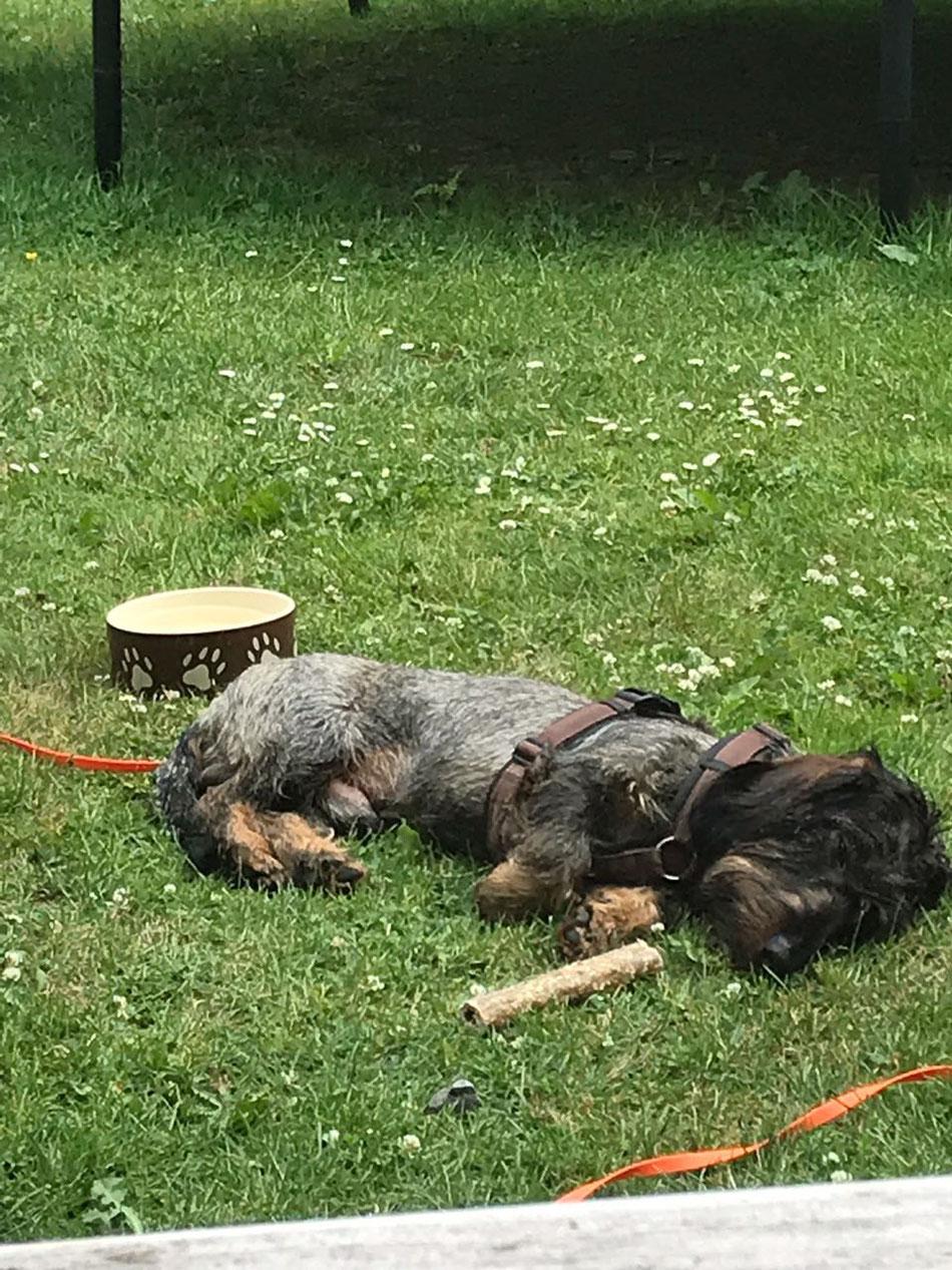 Vito ist vor seiner Kaustange eingeschlafen