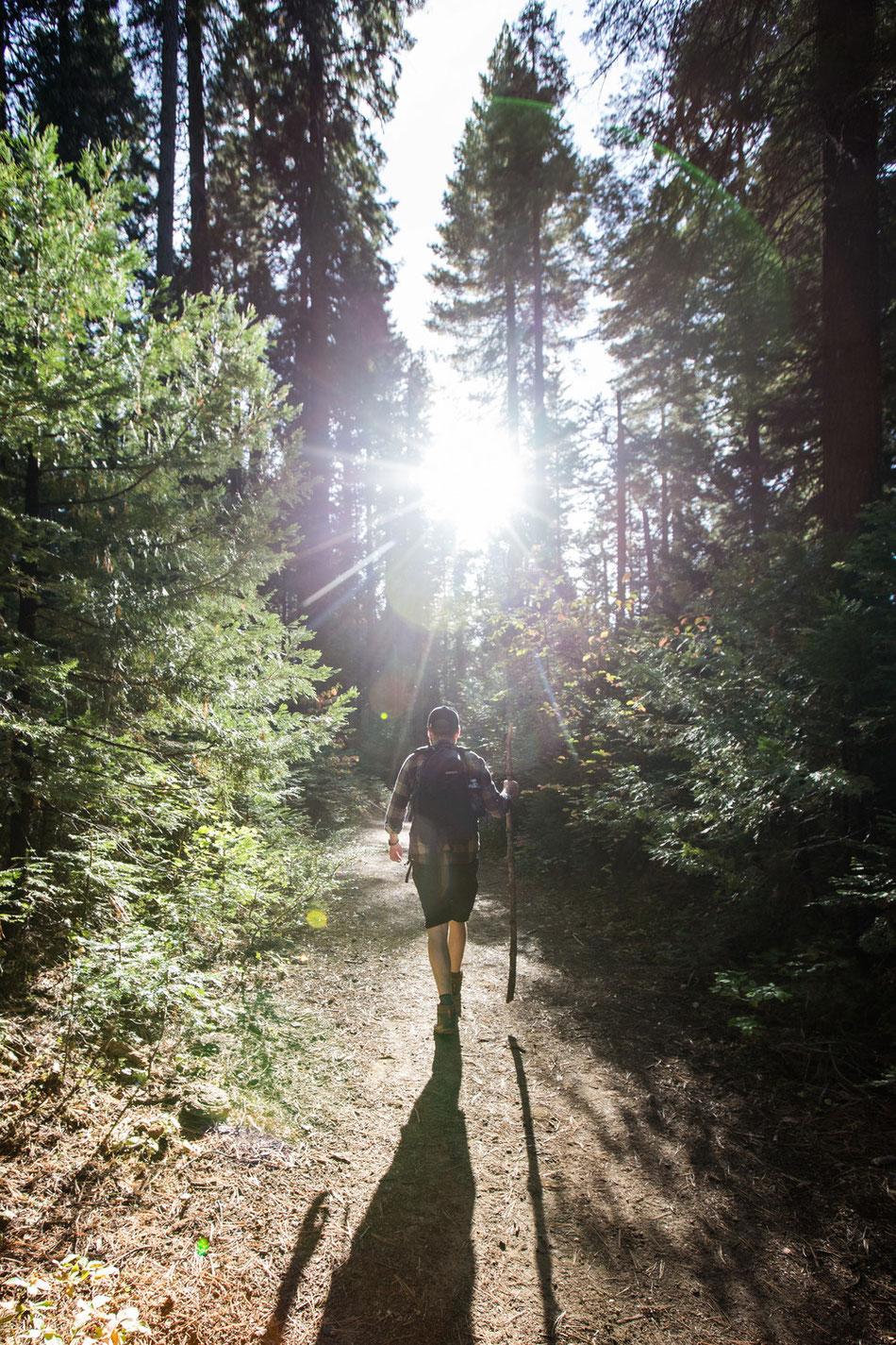 Wandern in der Nähe des Yosemite National Parks