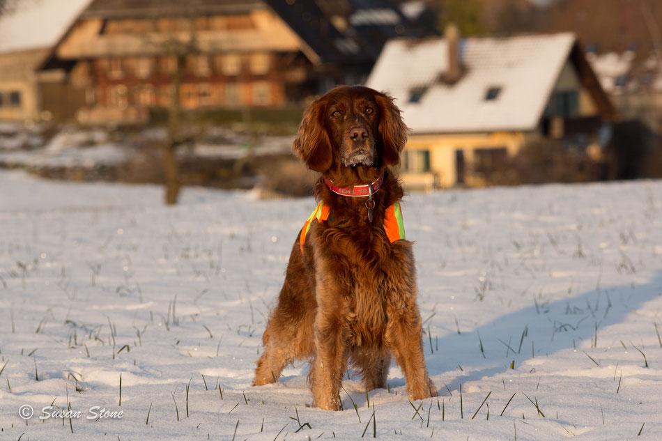 Annie im Januar 2021 auf unserem Spaziergang