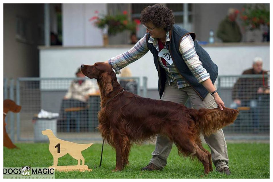 "Suomi ""Best of Breed"" Forst CAC 2016 - Foto: Bianca Heydegger"