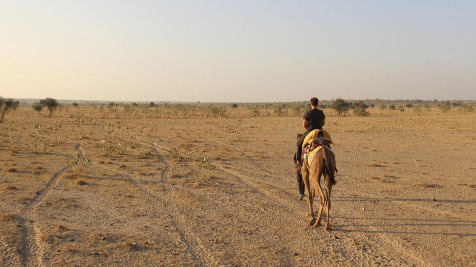 Man on camel desert