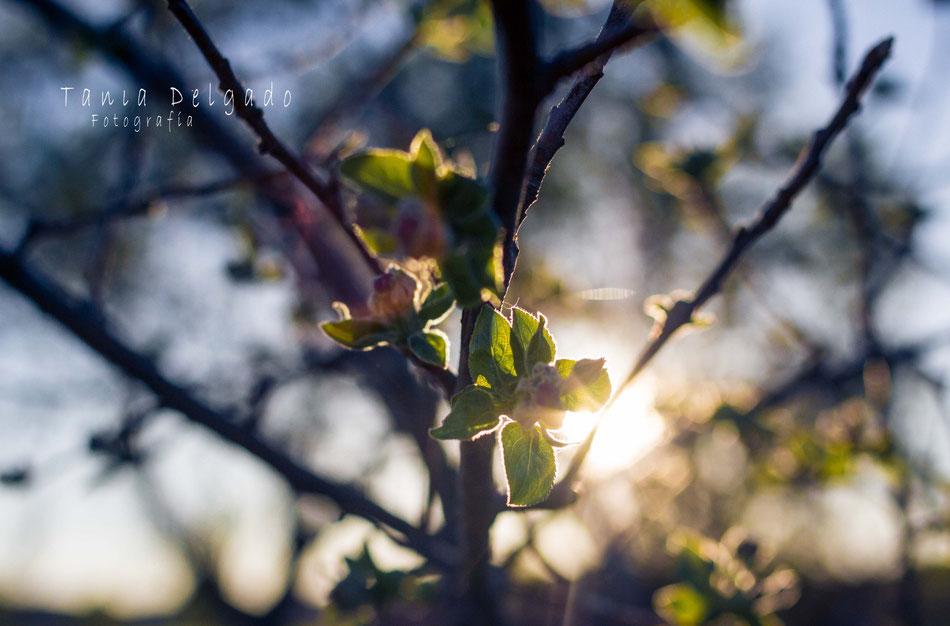 fotografia, naturaleza, atardecer, almendro