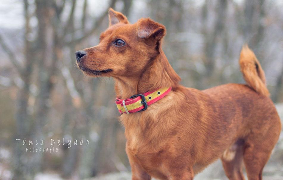 fotografia de animales, mascotas, fotografia en leganes, reportajes