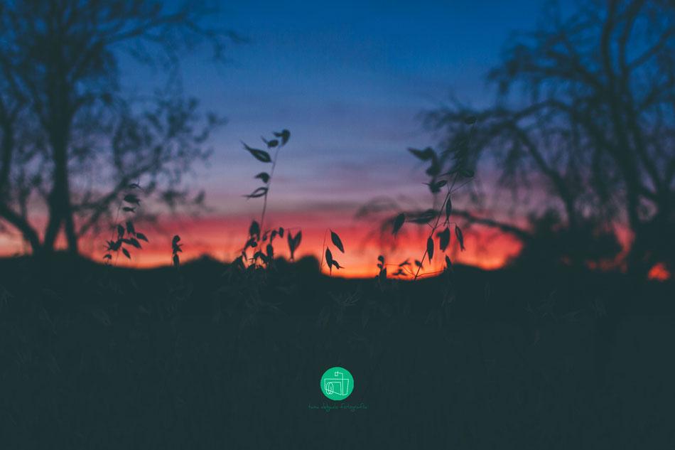 naturaleza, fotografia, atardecer, colores