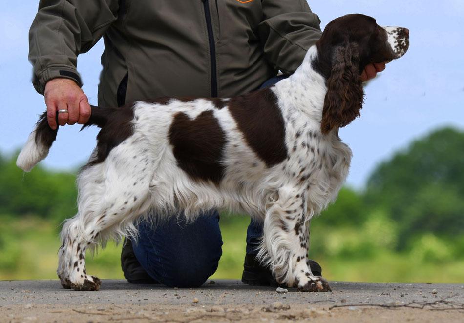 """Unser Herzenshund """"Queen Mary vom Belauer See"""", Foto: Claudia Bruhn"""