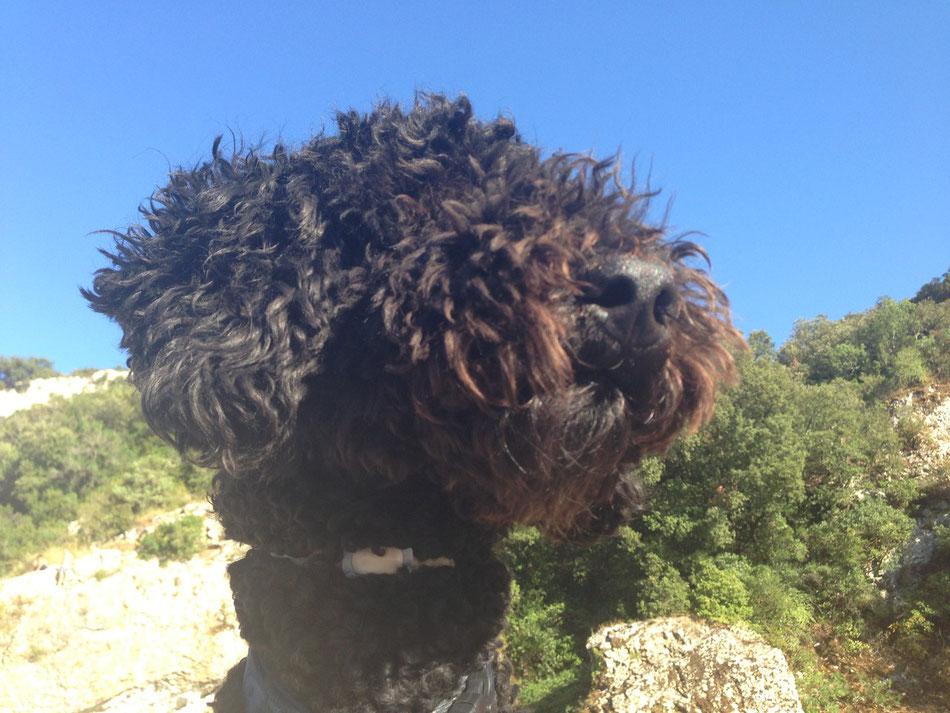 Sunny Dog in Sunshine - inklusive Scalibor-Halsbändchen