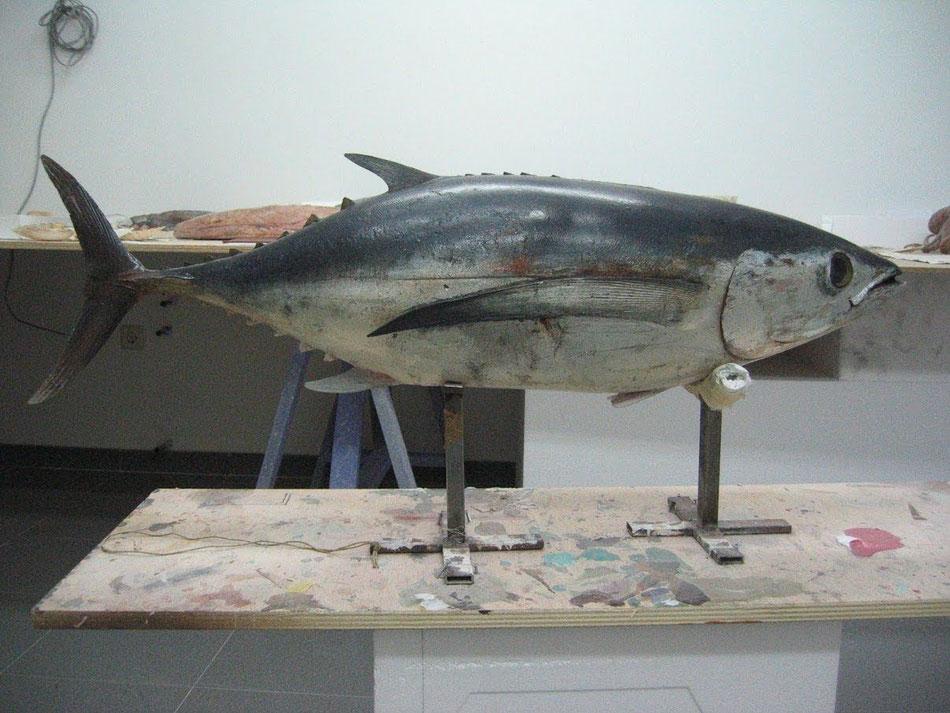 Atún, exposición en el Museo del Mar