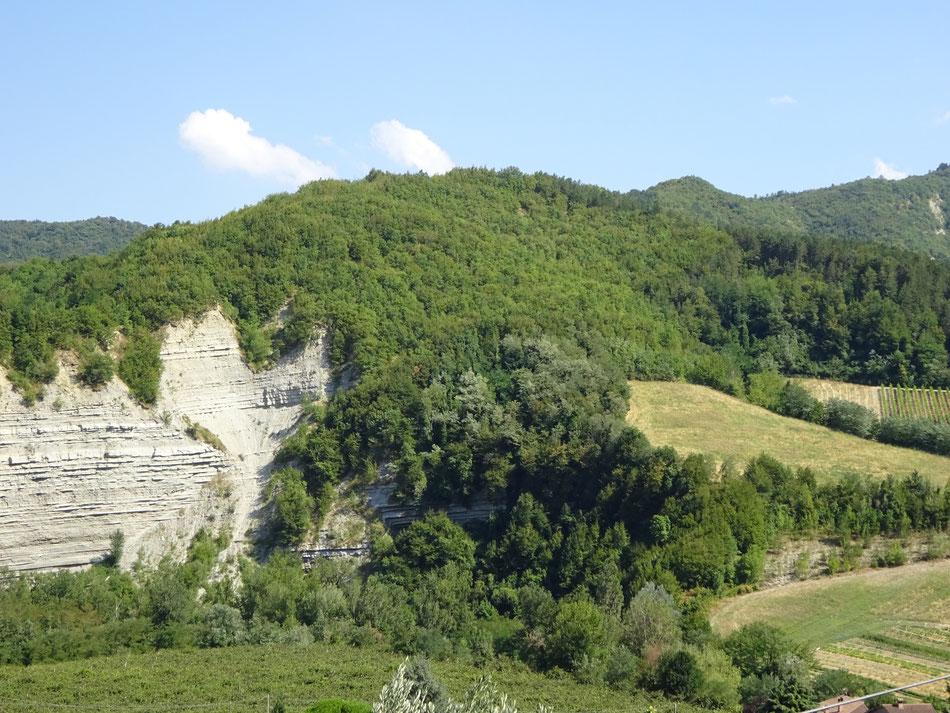 Boschi e montagne in cui raccogliamo le erbe officinali usate per preparare gli integratori alimentari