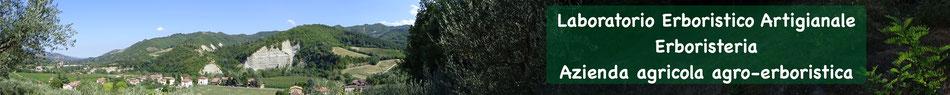 Foto panoramica dei boschi in cui raccogliamo le piante officinali.
