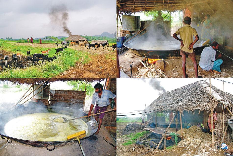 Tamil Nadu_ Zuckerrohr-Verarbeitung