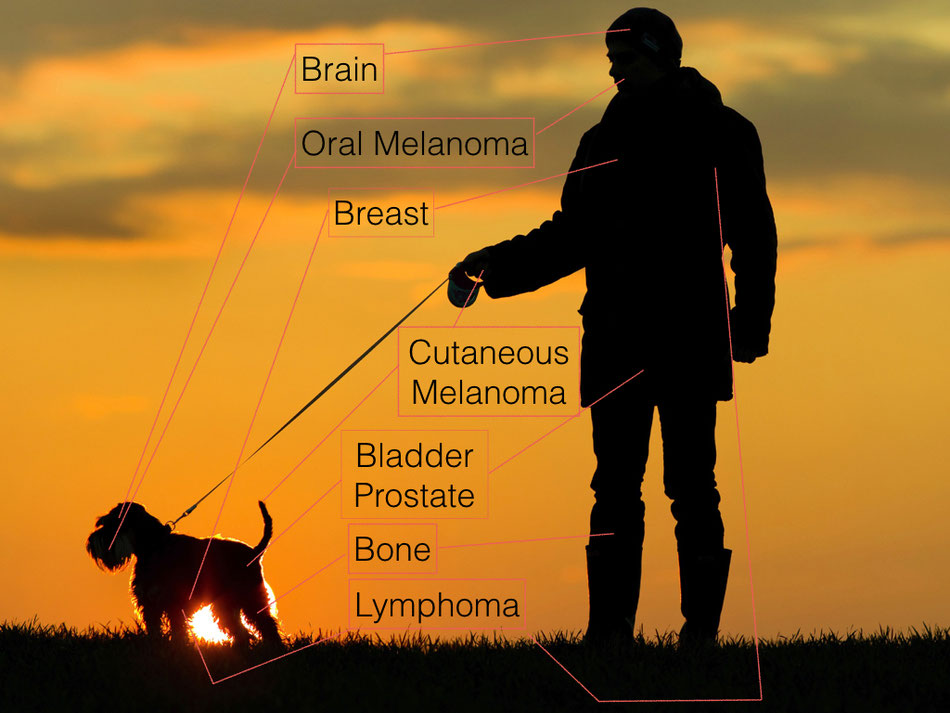 Oncologic similarities between humans and dogs. Schiffmann et.al. 2015