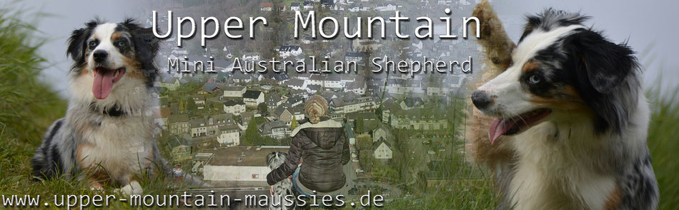 Upper Mountain Mini Aussies Banner