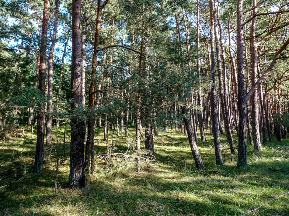 Im Darss-Wald.