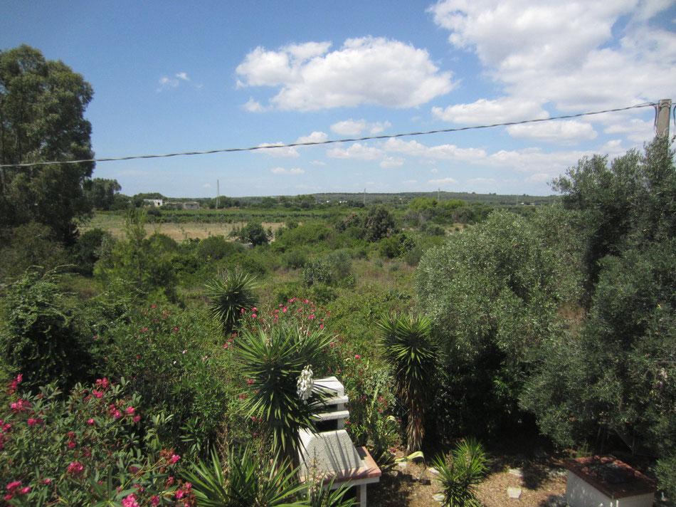 Blick von der Dachterrasse ins Naturschutzgebiet