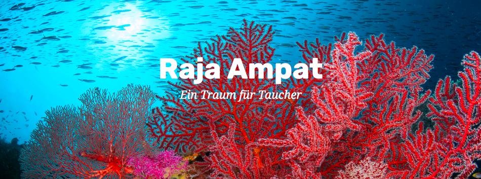 Korallenriff in Raja Ampat, Indonesien - Ein Traum für Taucher