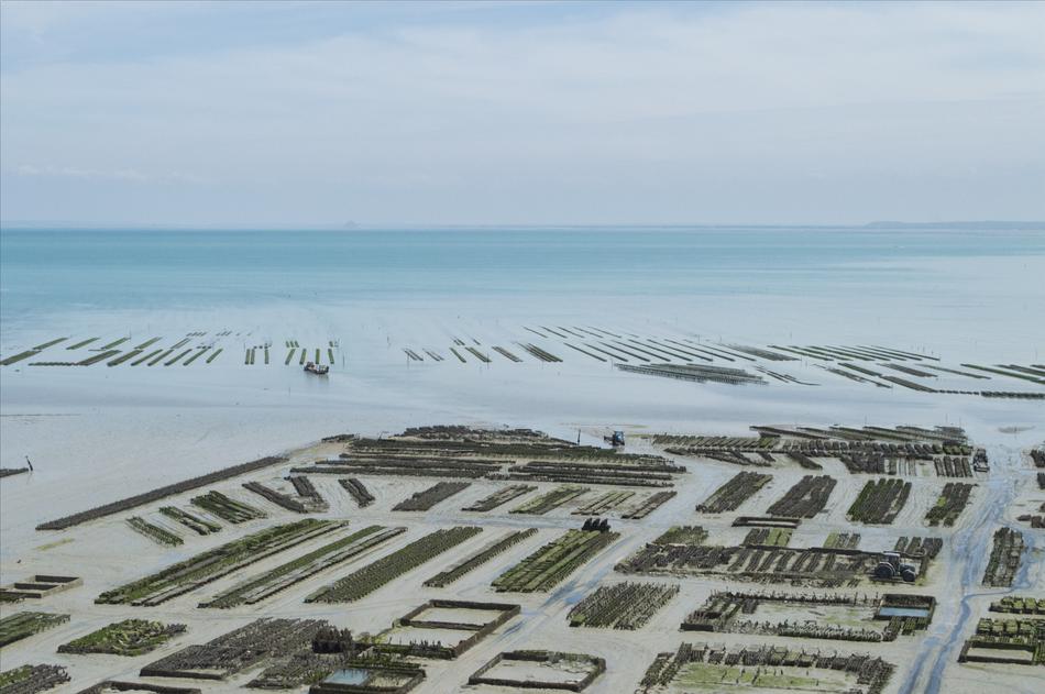 Parcs à huîtres Prod'homme Cancale Baie du Mont-Saint-Michel