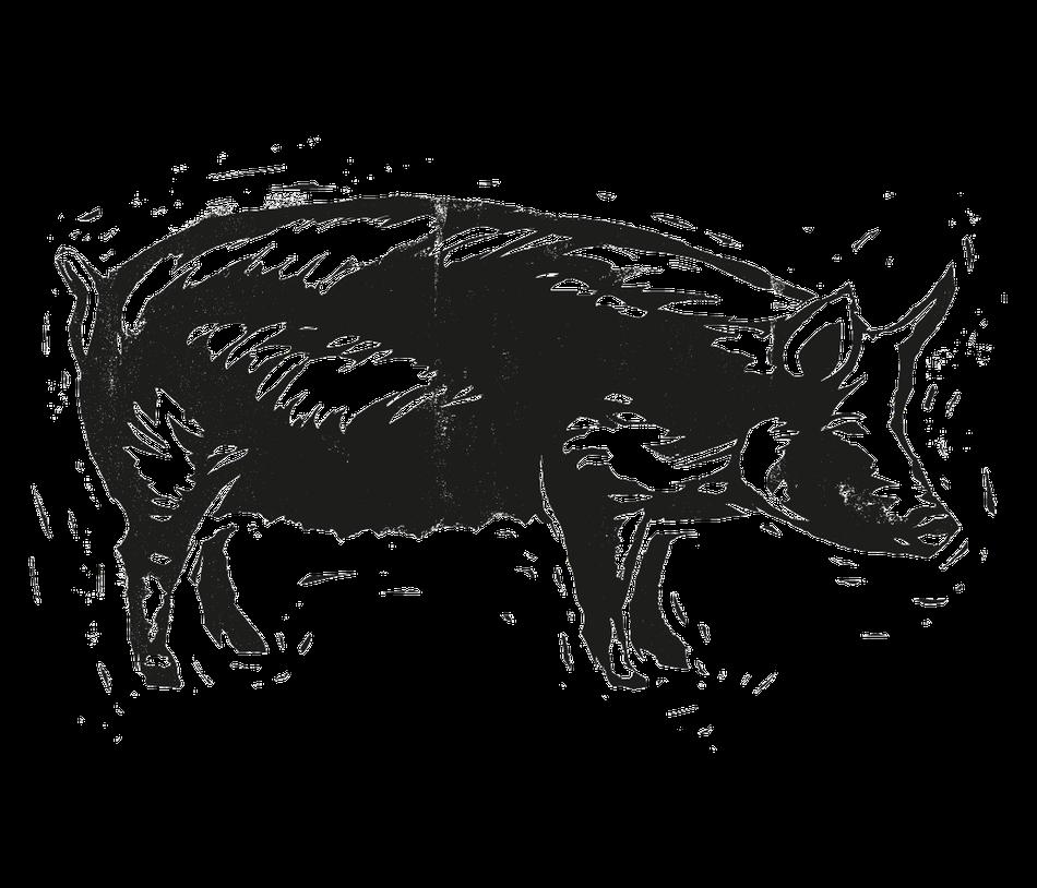linoldruck - schwein