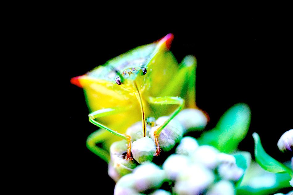 Käfer auf Blühte