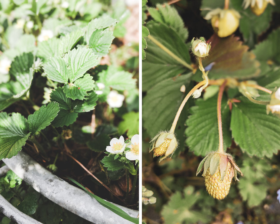 Erdbeer Saison