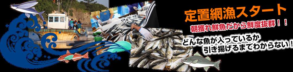 福井県にある鮮魚店真洋水産 定置網漁開始のご案内