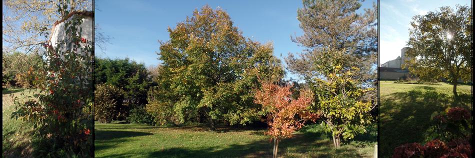 Les couleurs et variétés naturelles d'automne