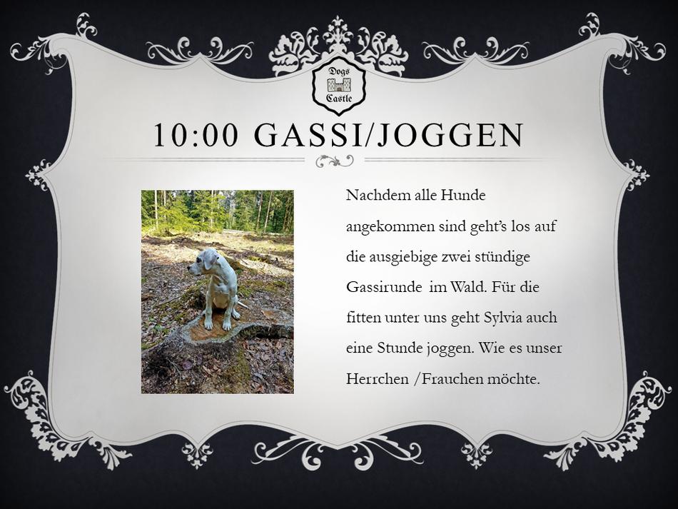 Nachdem alle Hunde im Dogs Castle Hundetagesstätte Aargau angekommen sind geht's los auf die ausgiebige zwei stündige Gassirunde  im Wald. Für die fitten unter uns geht Sylvia auch eine Stunde joggen. Wie es unser Herrchen /Frauchen möchte. Hundesitter