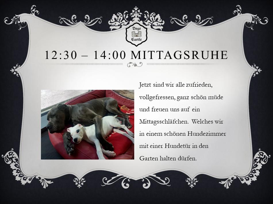 Mittagsruhe Dogs Castle Hundetagesstätte Leibstadt Aargau: Jetzt sind wir alle zufrieden, vollgefressen, ganz schön müde und freuen uns auf ein Mittagsschläfchen.  Welches wir in einem schönen Hundezimmer in den Garten halten dürfen. Hundesitter