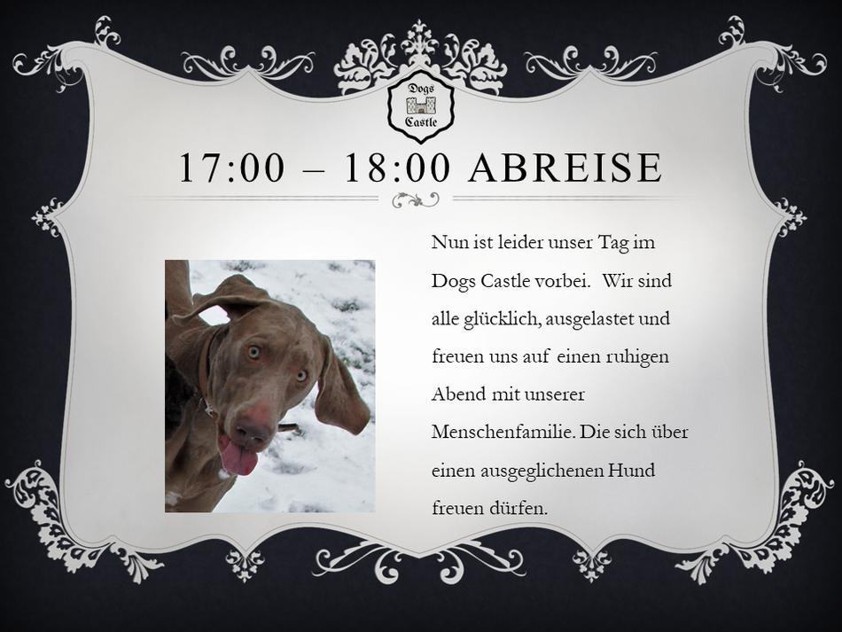 Nun ist leider unser Tag im Dogs Castle Hundetagesstätte Aargau vorbei.  Wir sind alle glücklich, ausgelastet und freuen uns auf einen ruhigen Abend mit unserer Menschenfamilie. Die sich über einen ausgeglichenen Hund freuen dürfen. Hundesitter