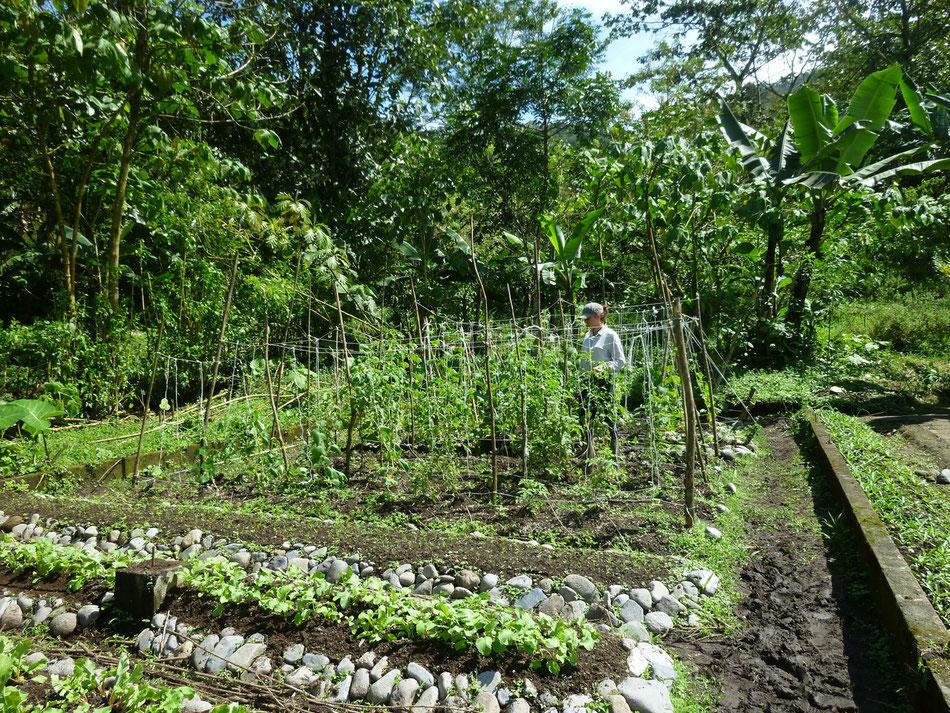 Gemüseanbau im Regenwald