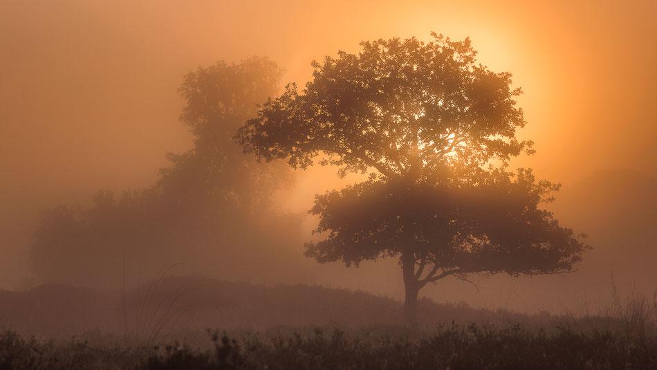 Zonsopkomst Gasterse Duinen © Jurjen Veerman