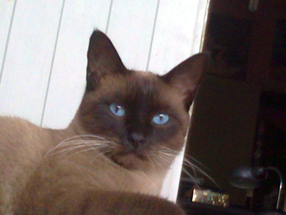 BAINJO, il mio gatto