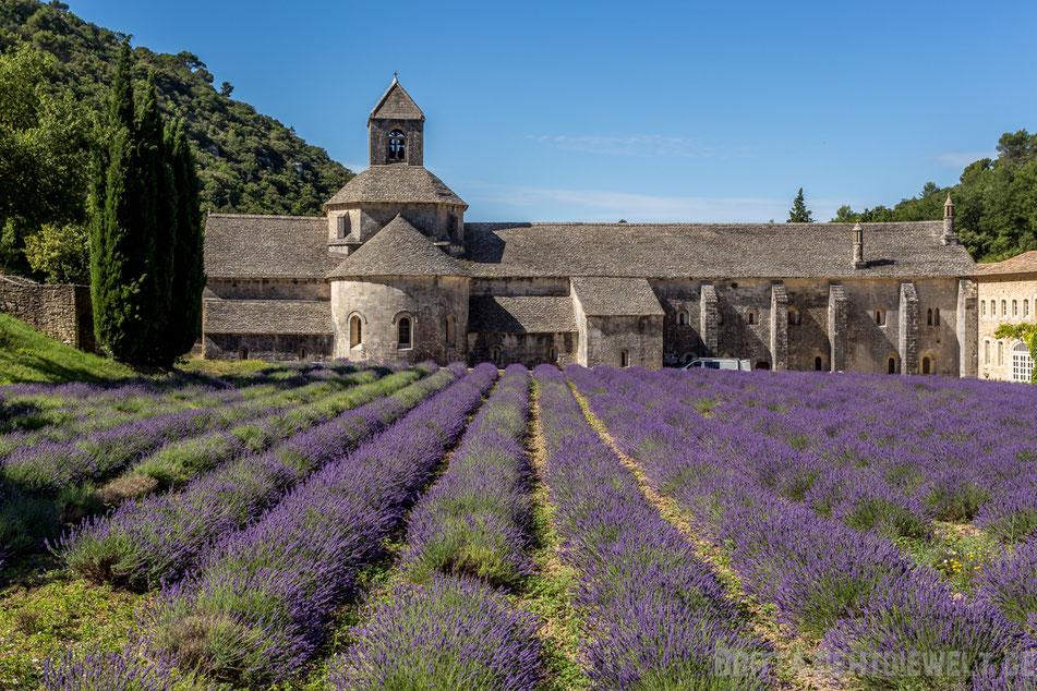 kloster, senanque, lavendelfelder, lavendel, lavendelblüte, sommer, luberon, reisetipps, infos, selbstgeplant, frankreich, provence