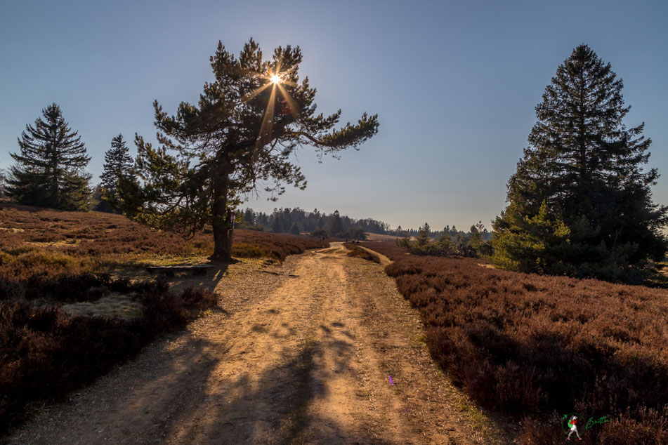 niedersfelder, hochheide, sauerland, wandern, fotografieren, heidelandschaft, clemensberg