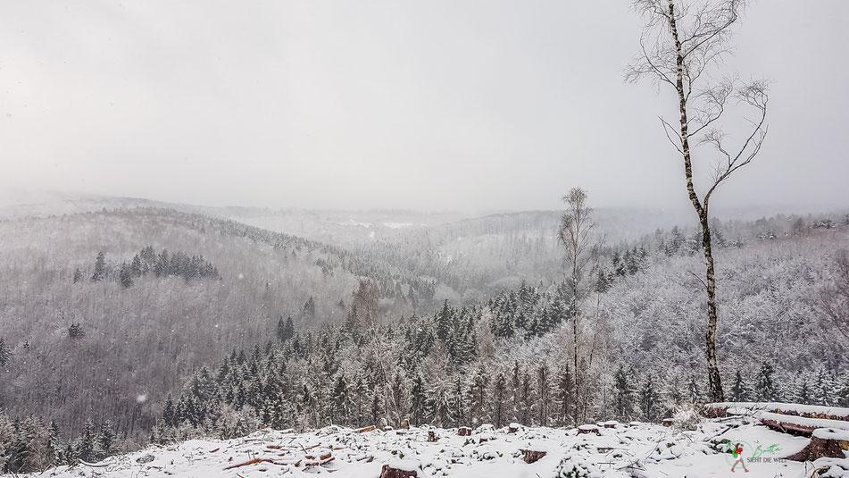 arnsberg, wanderung, rundwanderung, aussichtsroute, waldroute, winter, aussicht