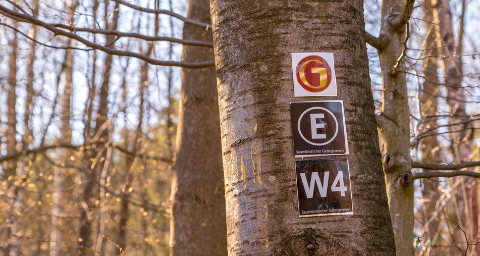wenholthausen, golddorf, route, wanderzeichen, rundwanderung, wandern, sauerland, wanderung, infos, tipps, karte