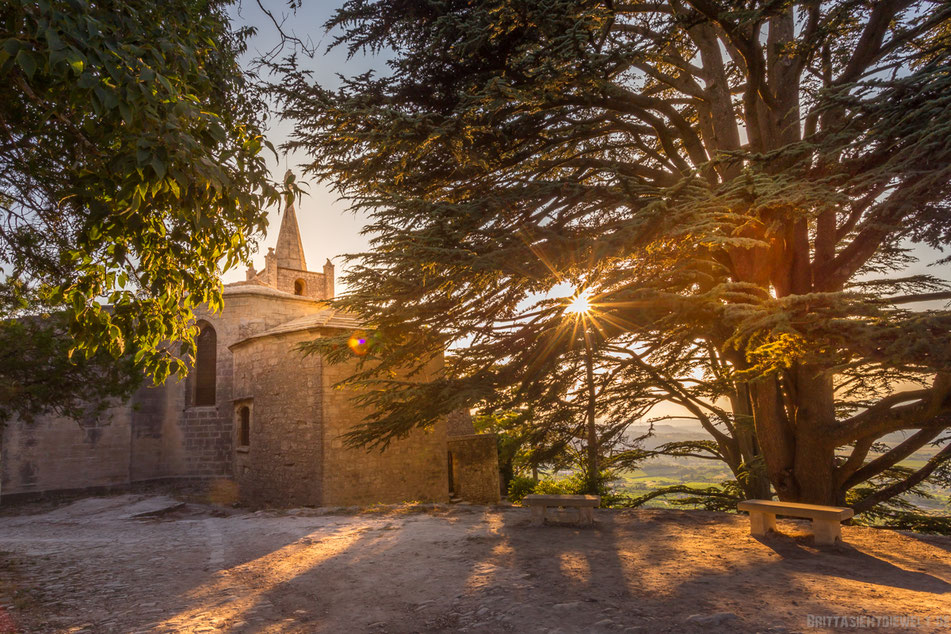 bonnieux, olivenbaum, sonnenuntergang, lavendelfelder, lavendel, lavendelblüte, sommer, luberon, reisetipps, infos, selbstgeplant, frankreich, provence