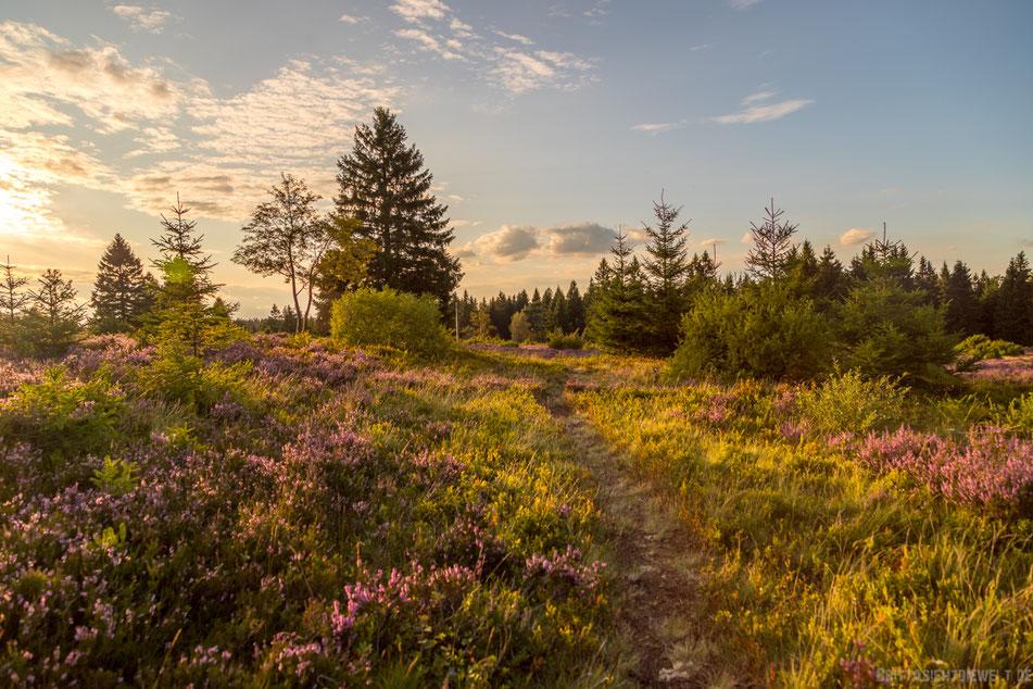 sauerland, hochheide, niedersfeld, wandern, wanderung, hiking, wanderroute, karte, tipps, infos