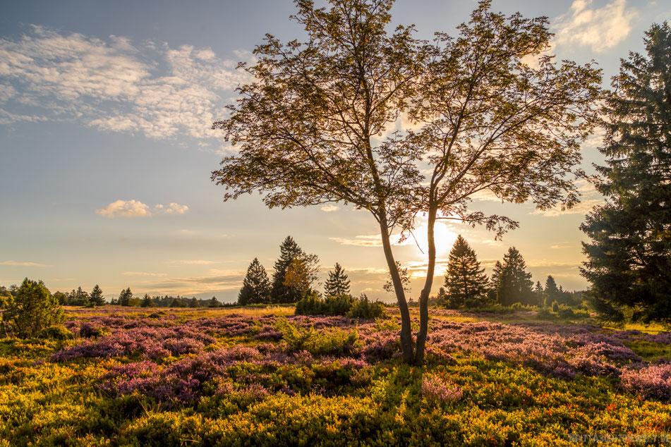 sauerland, hochheide, niedersfeld, wandern, wanderung, hiking, wanderroute, karte, tipps, infos, aussicht