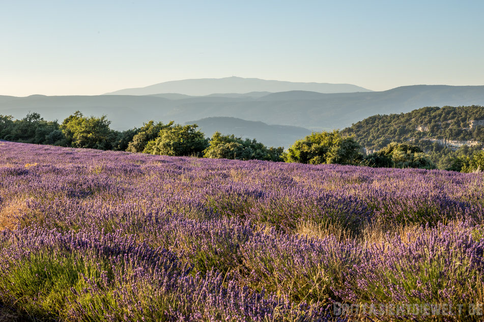 mont ventroux, lavendelfelder, lavendel, lavendelblüte, sommer, luberon, reisetipps, infos, selbstgeplant, frankreich, provence