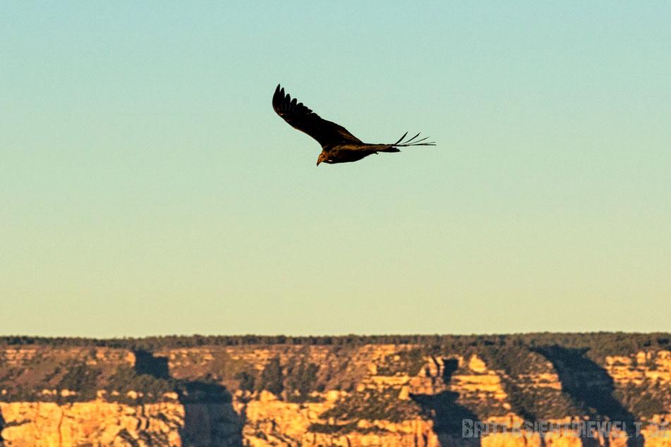 condor,grand,canyon,hopi,view,point,jucy,sehenswürdigkeiten,tipps,oktober,fotografie