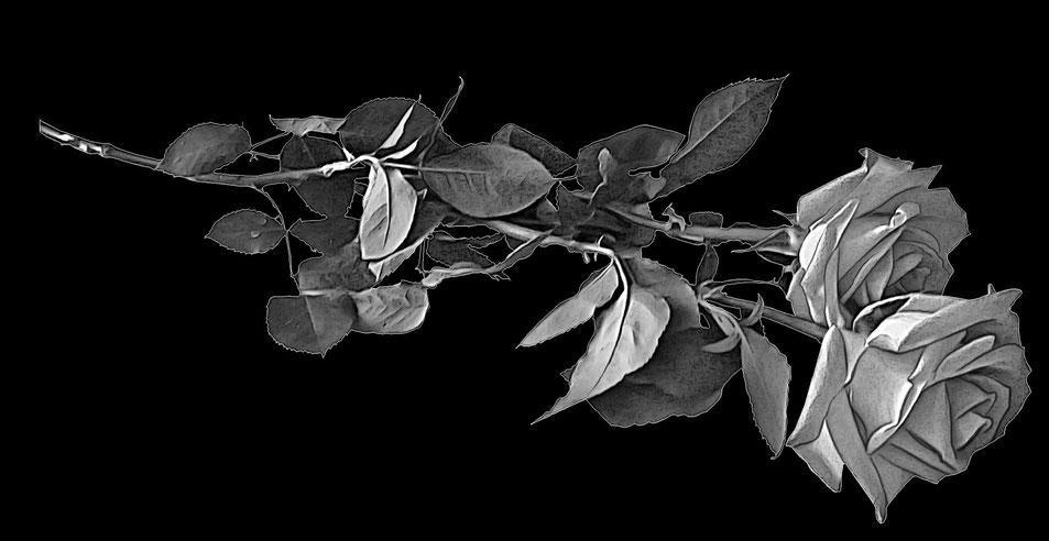 розы для гравировки на памятнике