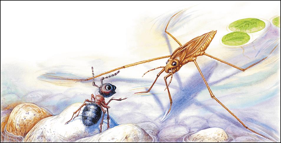 виталий бианки приключения муравьишки с картинками вокруг нее
